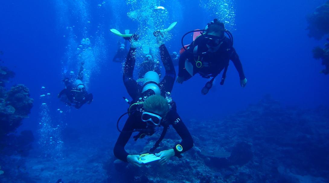 Vrijwilligers duiken om gegevens te verzamelen tijdens het haaienbescherming project in Fiji